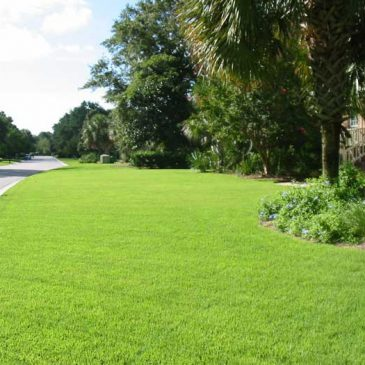 Protecting the health of the environment through 'Green' lawn care practices