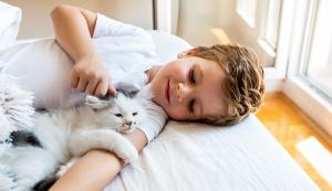 Stuhr Pets image