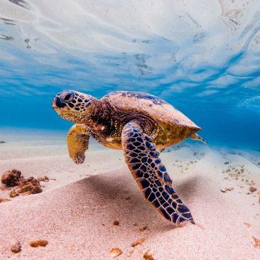 5 Simple Ways to Protect South Carolina Nature
